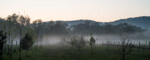 Eisheiligen Nebel